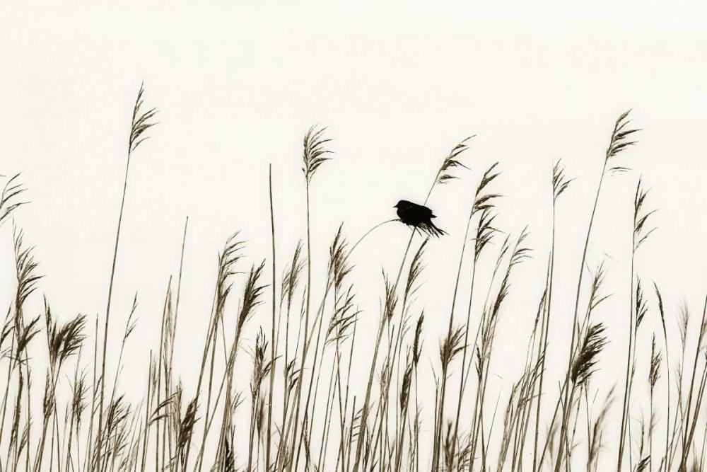 Bird in the Grass I Hausenflock, Alan 1193