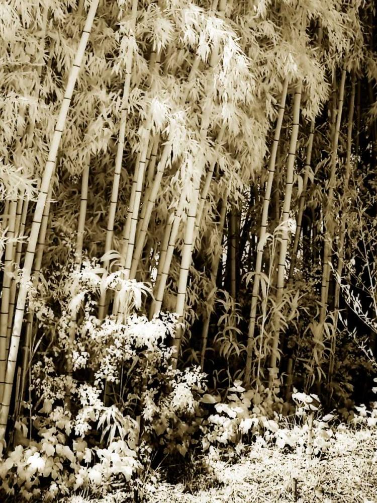 Bamboo Grove I Hausenflock, Alan 1316