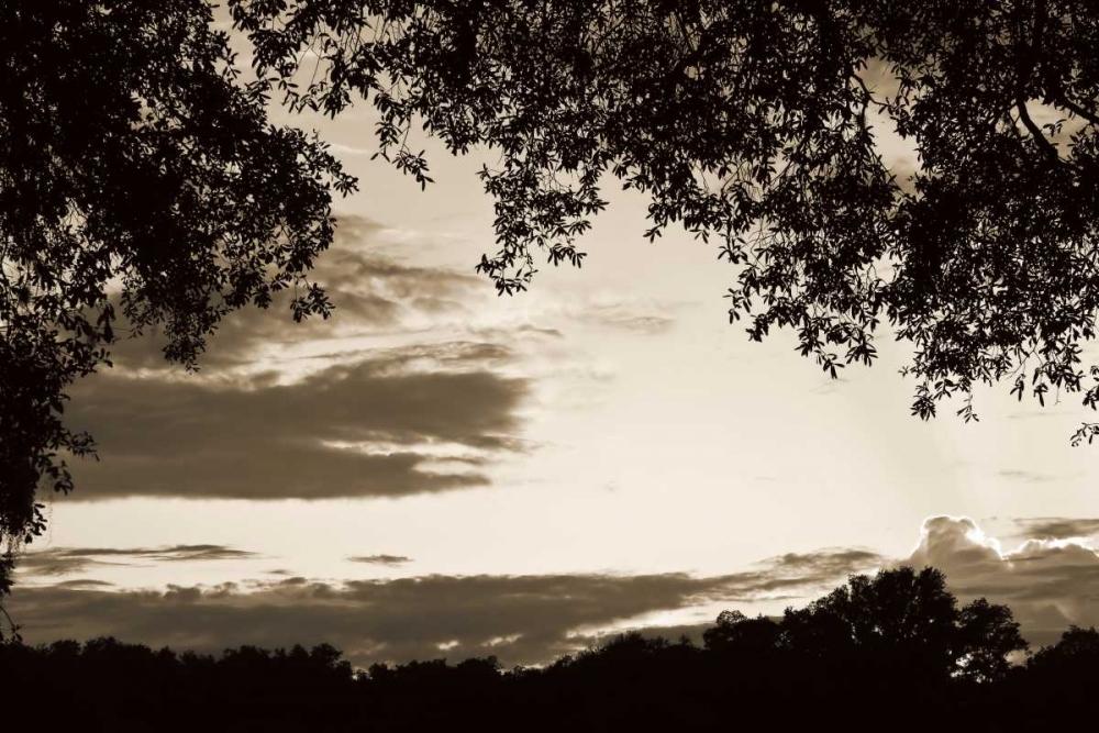 Sunset through Trees II Hausenflock, Alan 264