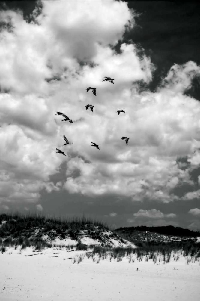 Pelicans over Dunes V Hausenflock, Alan 478