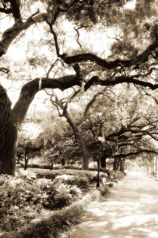 Savannah Sidewalk II Hausenflock, Alan 481