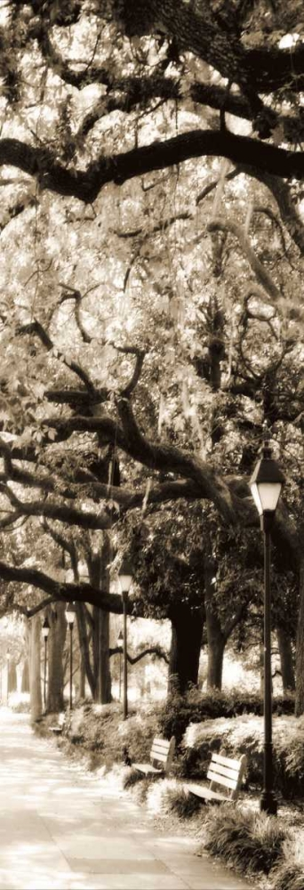 Savannah in Sepia I Hausenflock, Alan 498