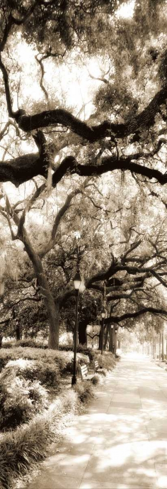 Savannah in Sepia II Hausenflock, Alan 499