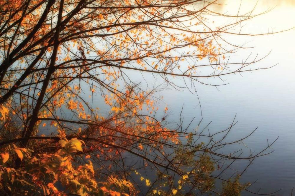 Leaves of Orange I Hausenflock, Alan 2030
