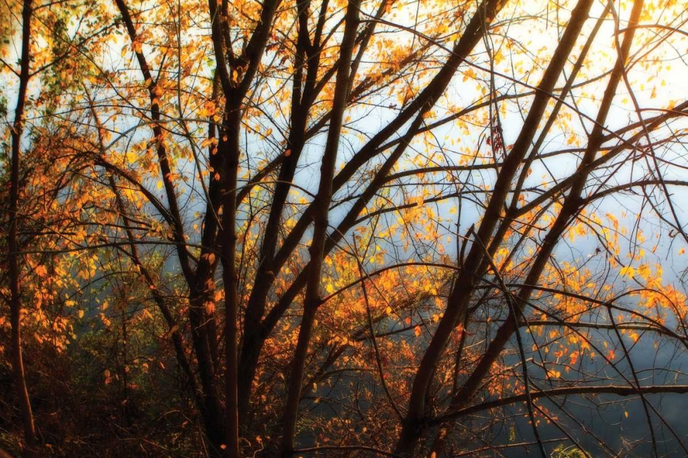 Leaves of Orange III Hausenflock, Alan 2032