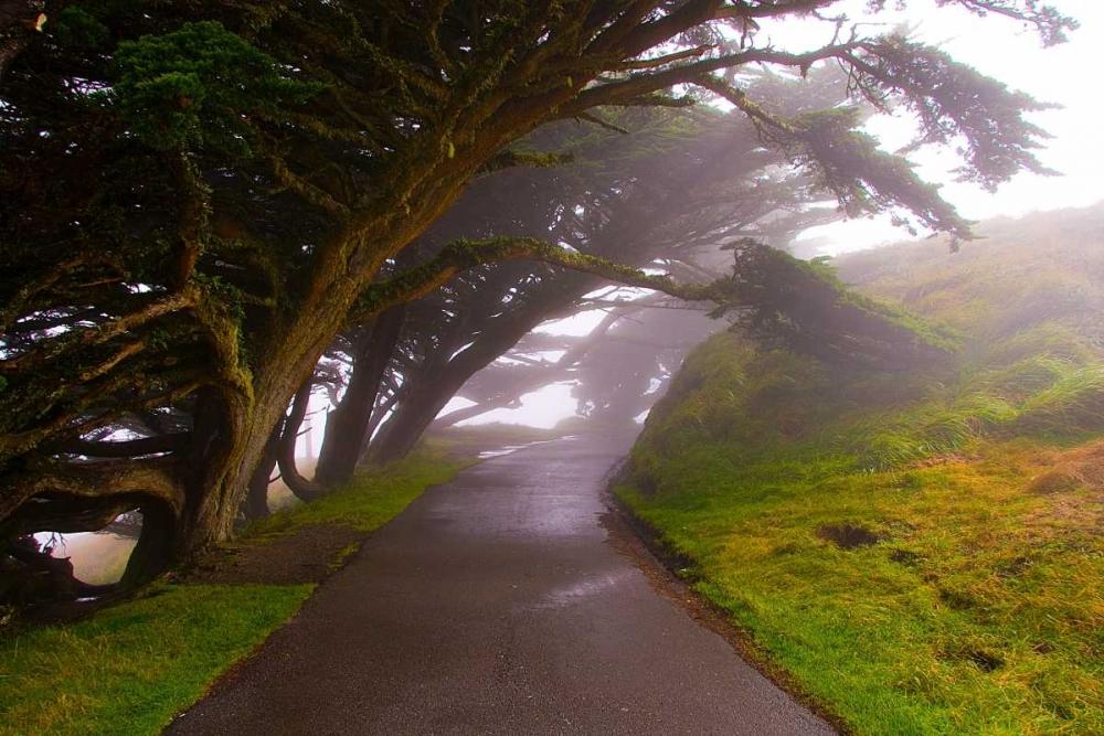 Foggy Path Johnson, George 20070
