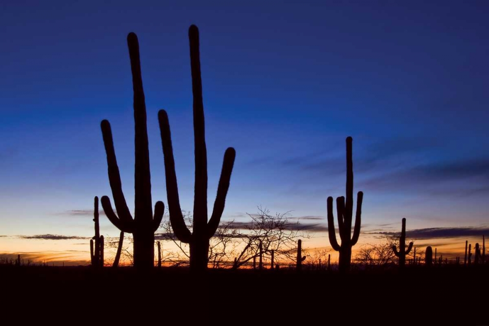 Classic Saguaro Sunset II Malvin, Larry 2348