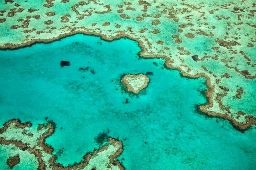 Great Barrier Reef IV Malvin, Larry 24826