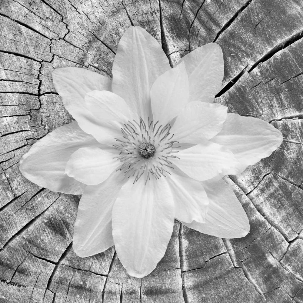 Bloom II Mahan, Kathy 24882