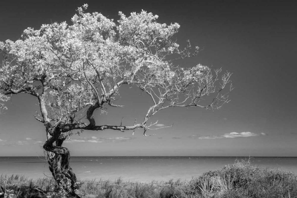Lone Tree I Mahan, Kathy 64198