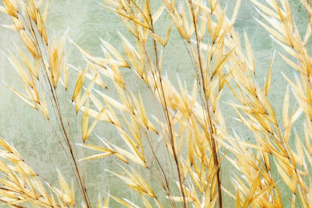 Golden Grasses Mahan, Kathy 146034