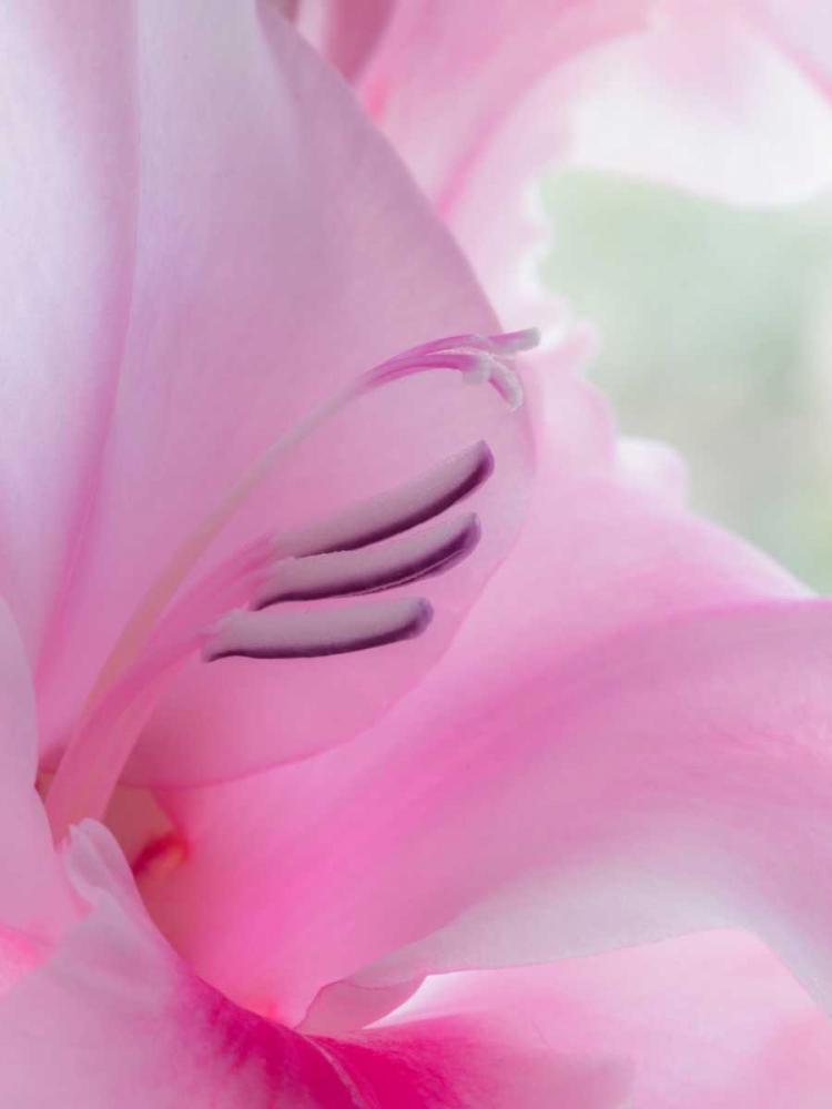 Gladiola Blossom I Mahan, Kathy 146088