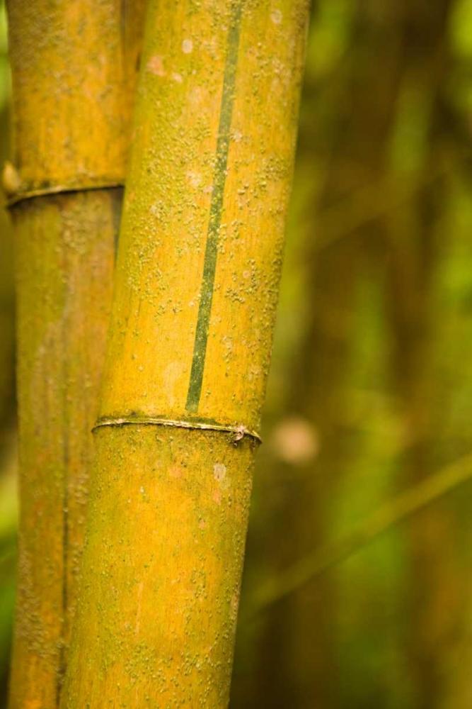 Bamboo I Millet, Karyn 2440