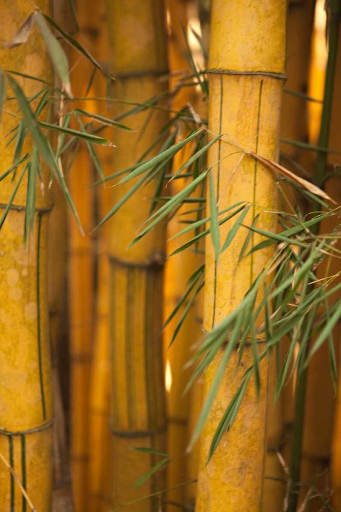 Bamboo II Millet, Karyn 2441