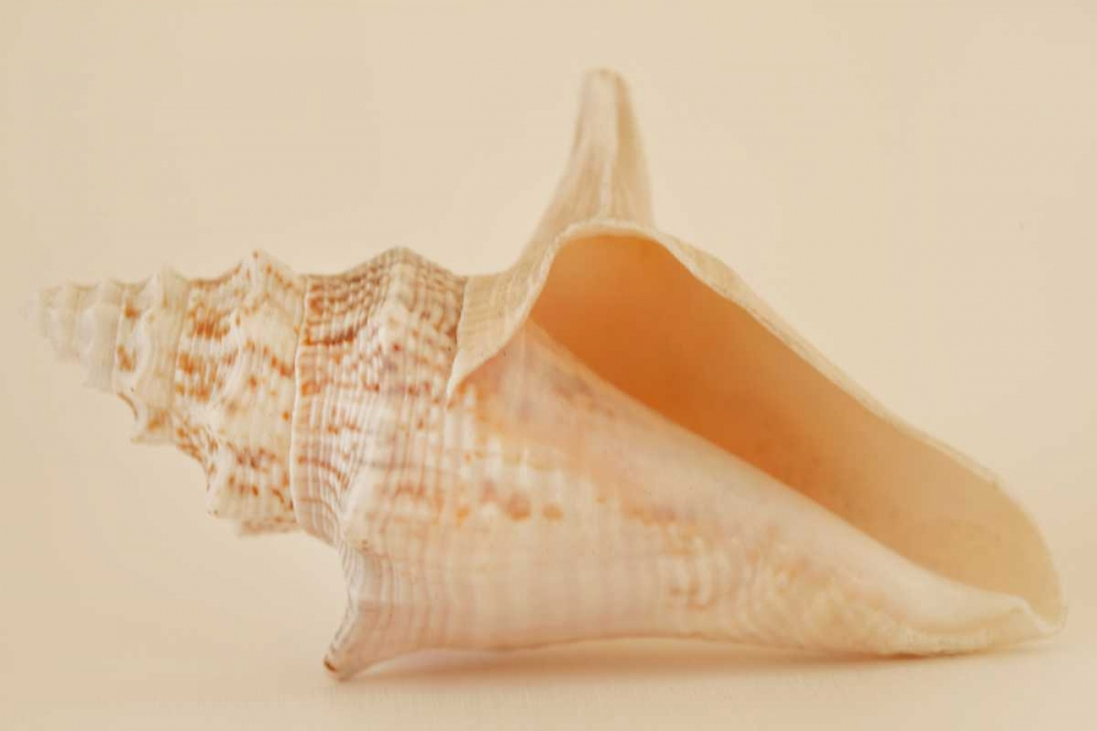 Ocean Treasures IX Millet, Karyn 9683
