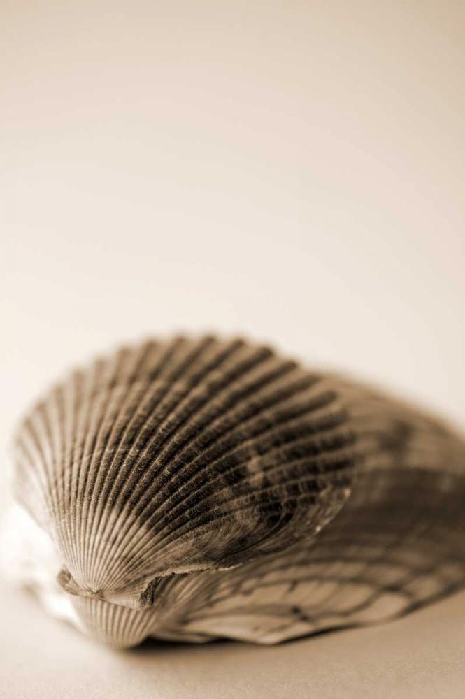 Shell Symmetry I Millet, Karyn 9693