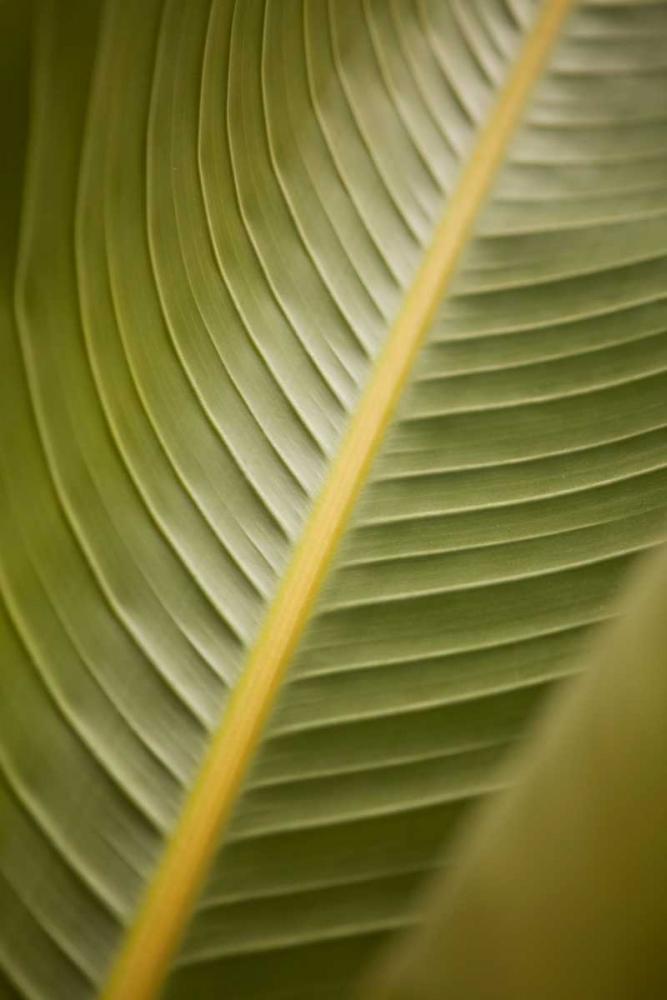 Tropical Leaves II Millet, Karyn 9720