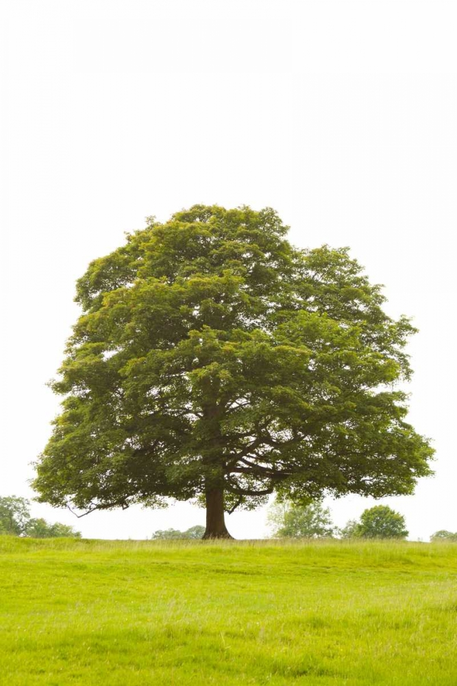 Tree I Millet, Karyn 9769