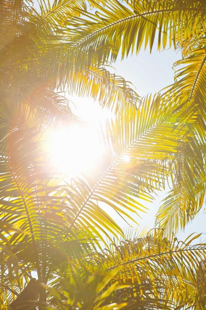 Tropical Oasis II Millet, Karyn 20238