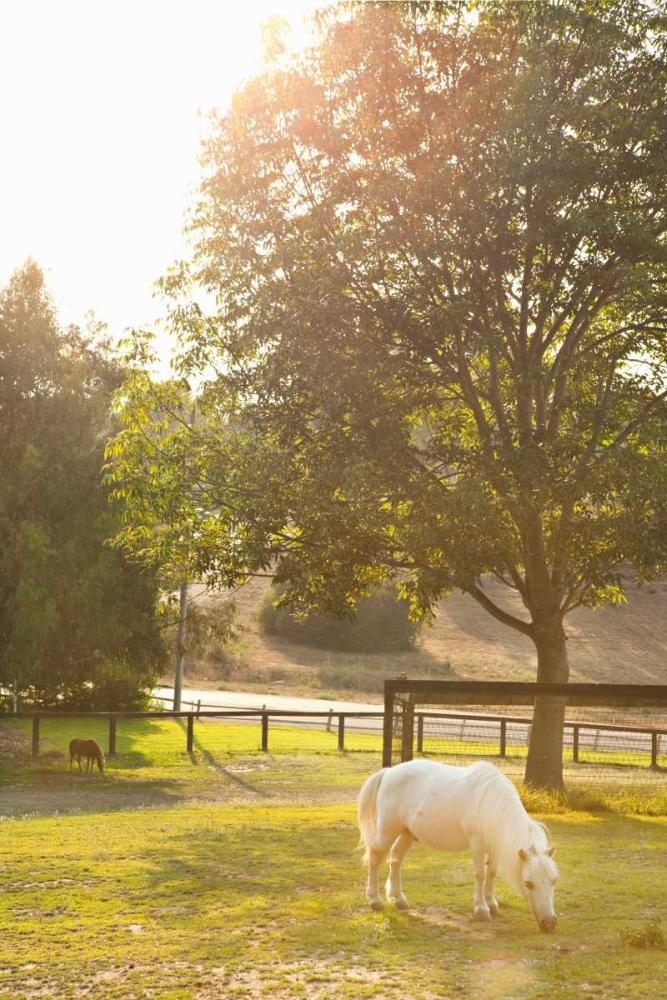 White Pony Millet, Karyn 20274