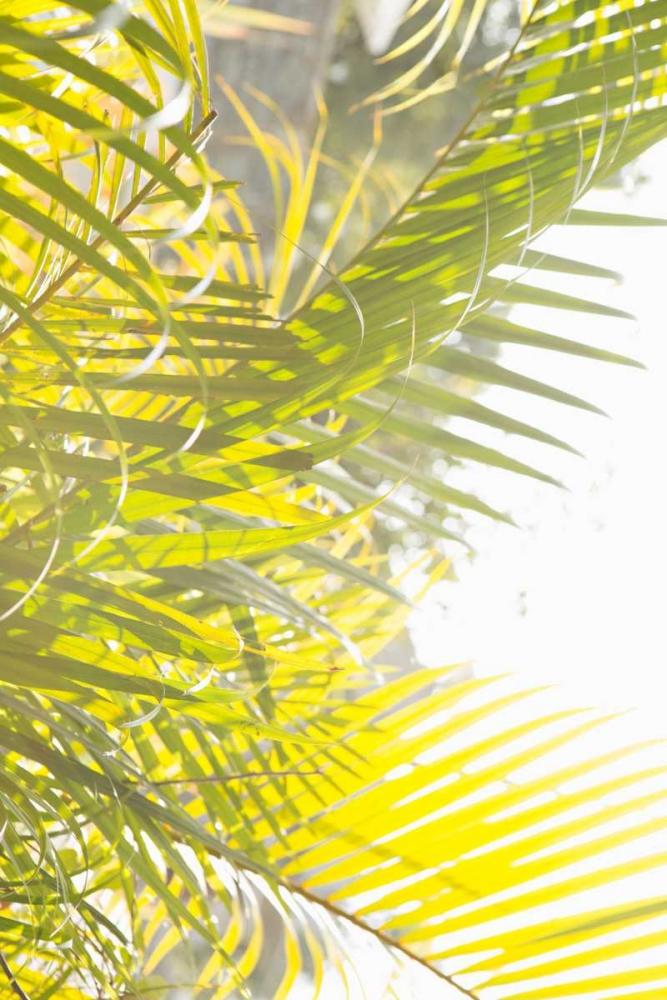 Palm Fonds Millet, Karyn 146223