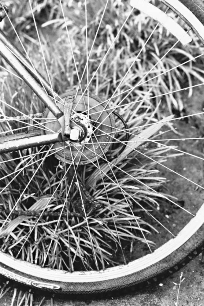 Bike Spoke Millet, Karyn 146376