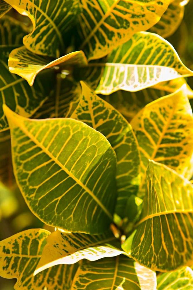 Green Leaves II Millet, Karyn 146420