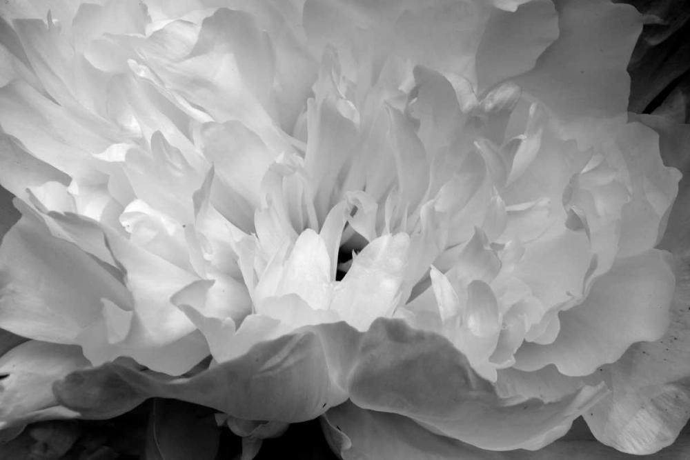 Macro Flower II Moore, Brian 2690