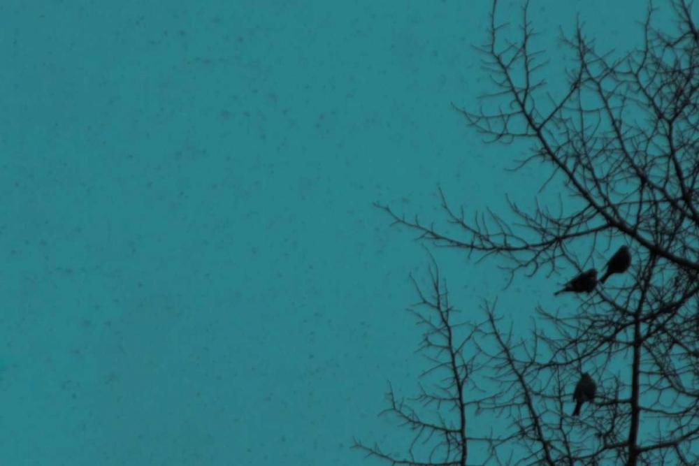 Birds in the Bush Murray, Roberta 24991