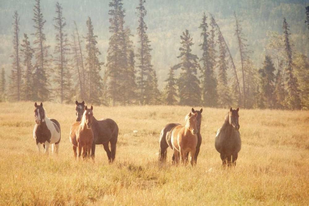 Morning in the Meadow Murray, Roberta 25026