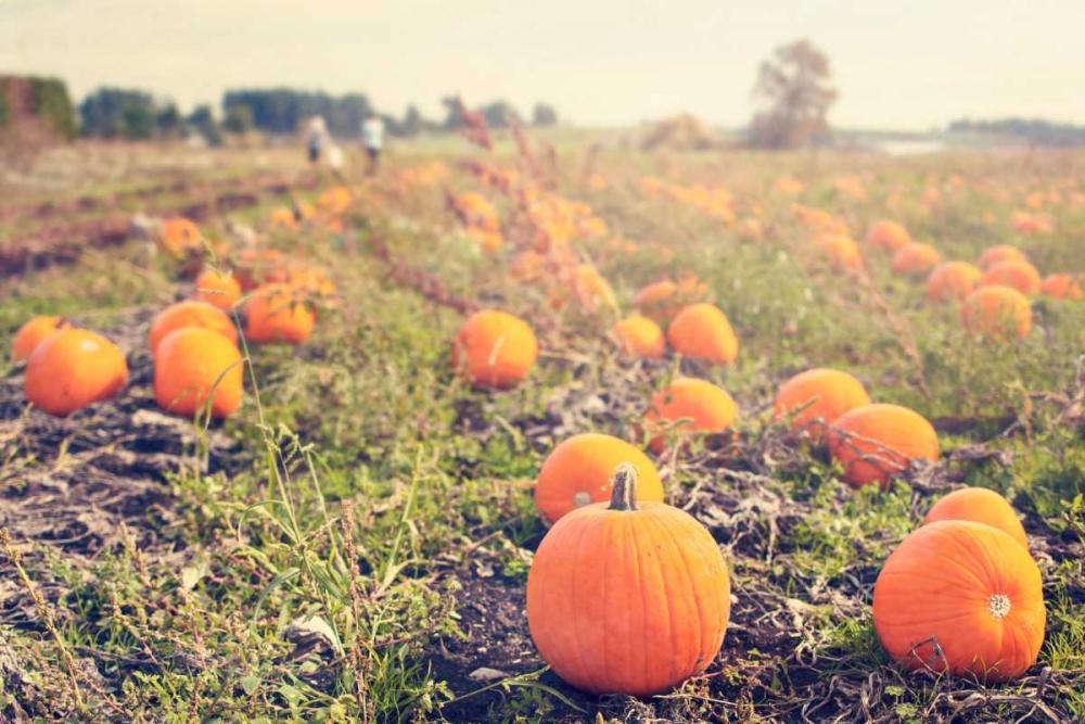 Pumpkin Patch Murray, Roberta 29679