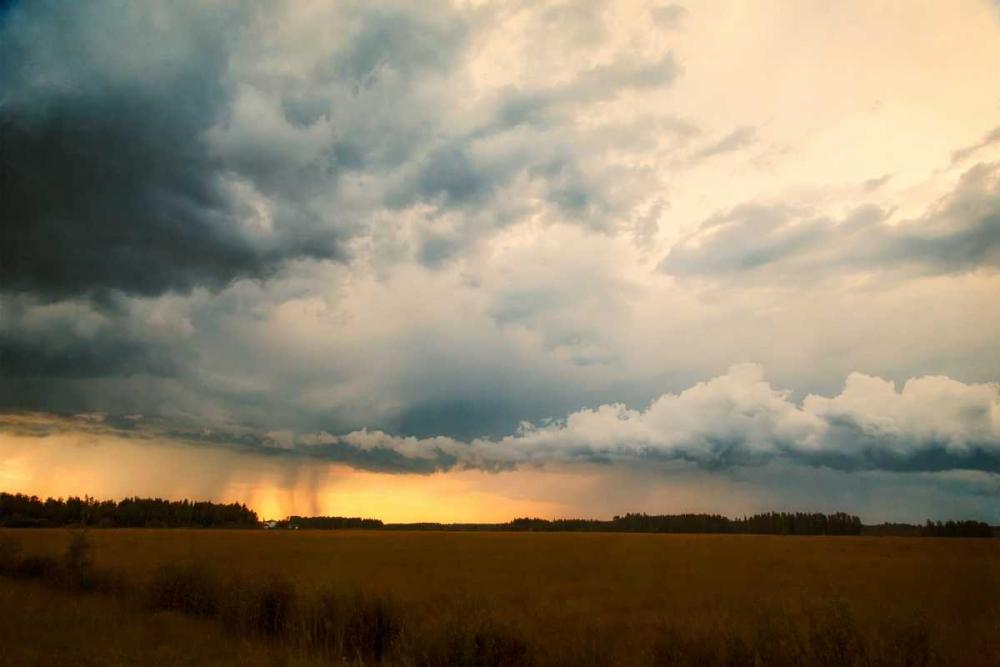 Rainshaft Murray, Roberta 29701