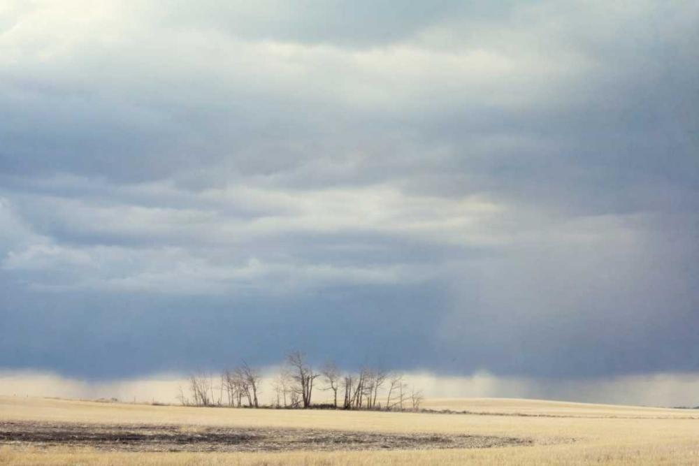 A Little Rain Murray, Roberta 64223