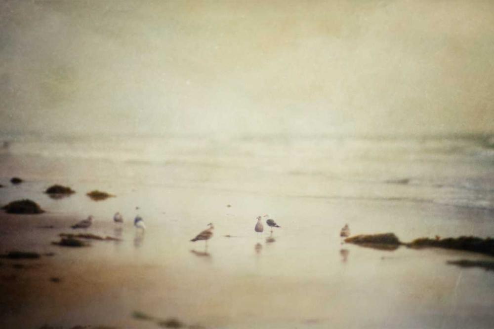 Gulls On A Beach Murray, Roberta 64274