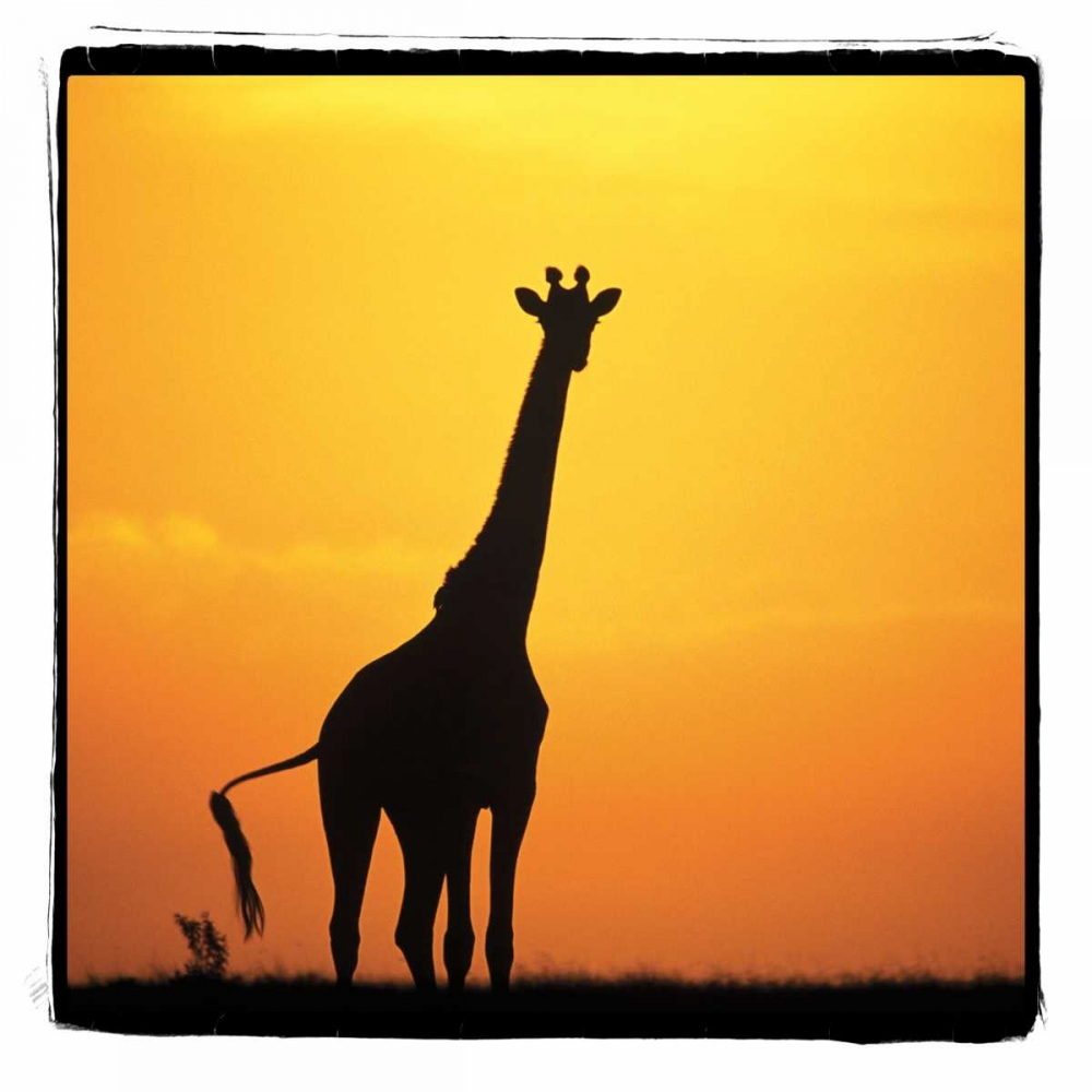 Radiant Africa I Parker, Susann 2734