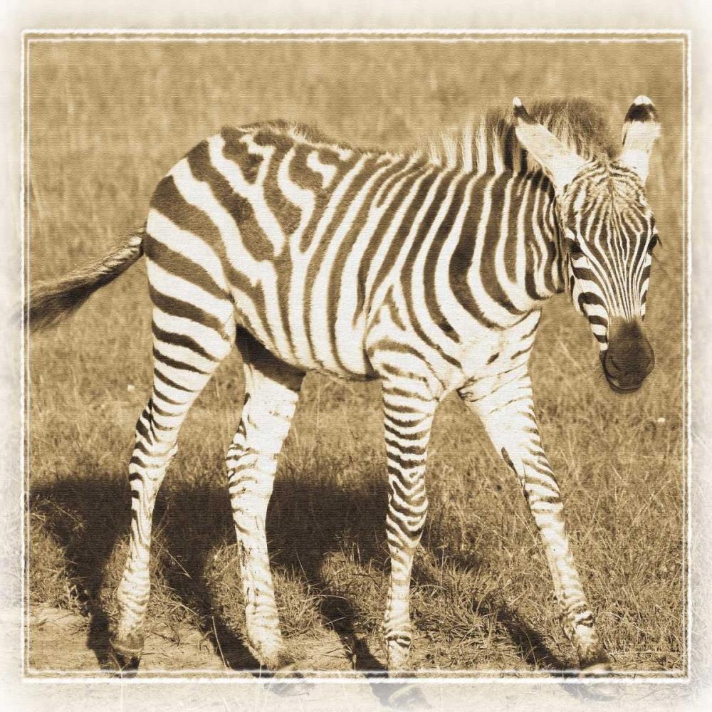 Young Africa Zebra Parker, Susann 2741