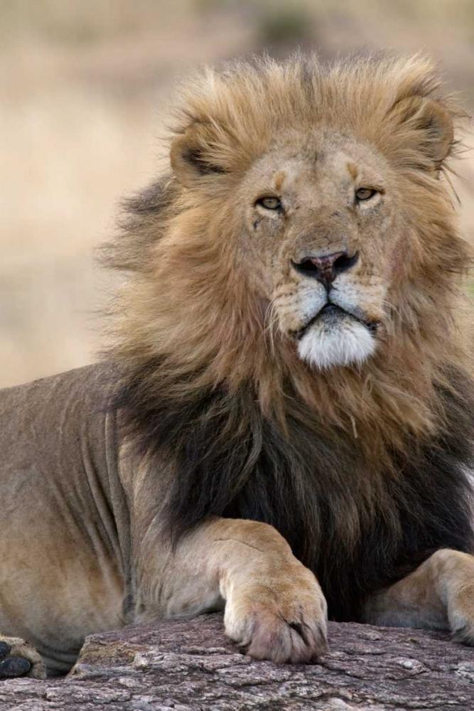 Africas King Parker, Susann 2761