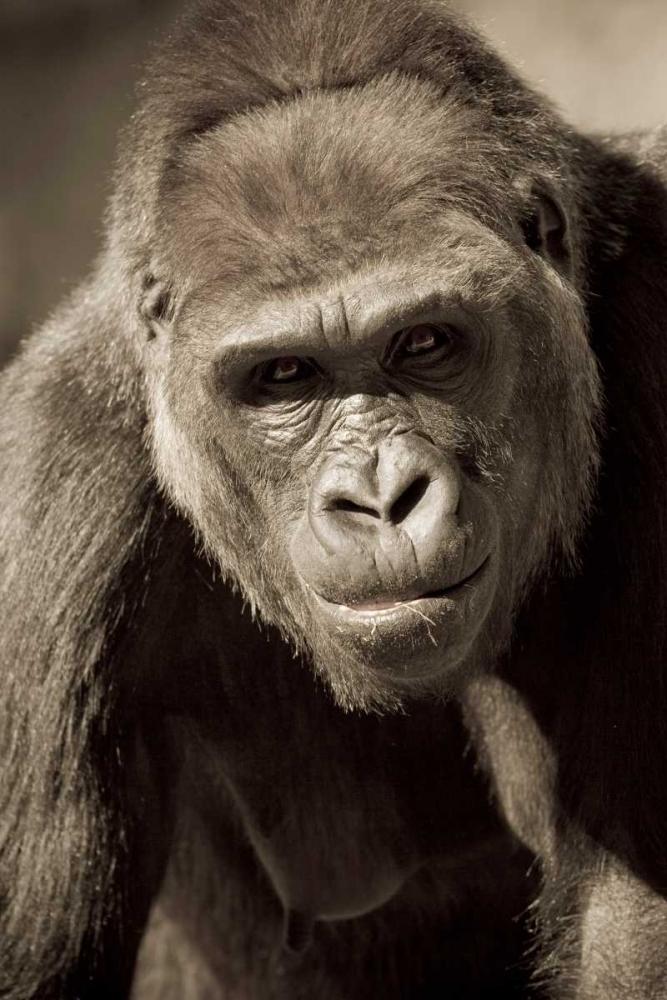 Planet of the Apes Parker, Susann 2781