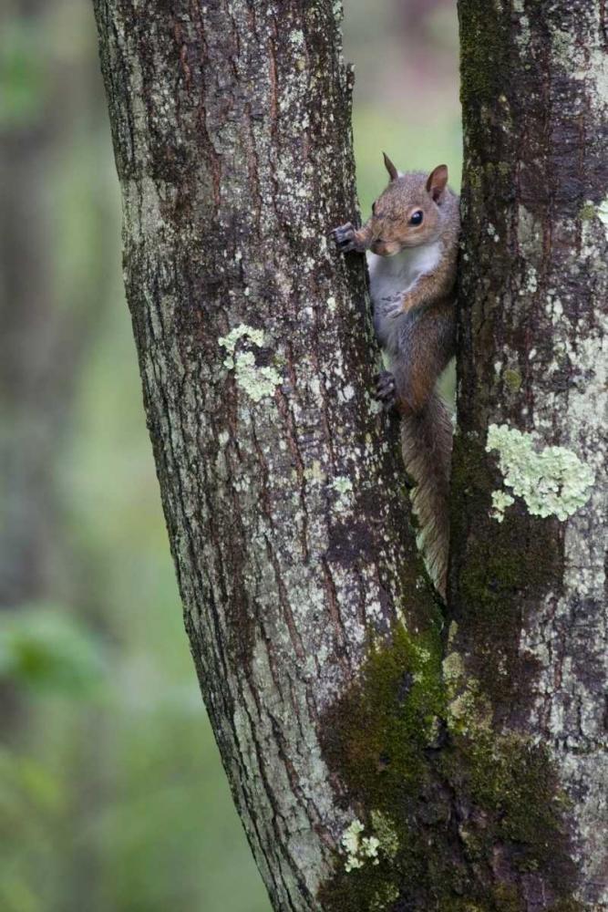 Squirreling Around Parker, Susann 2791
