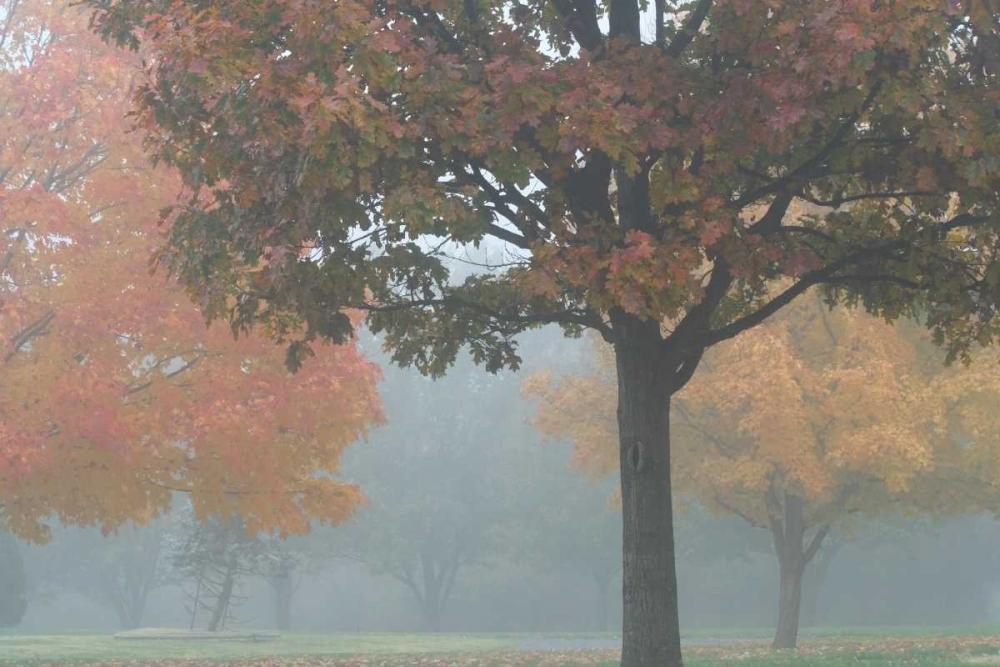 Foggy Trees II Putman, Tammy 2966