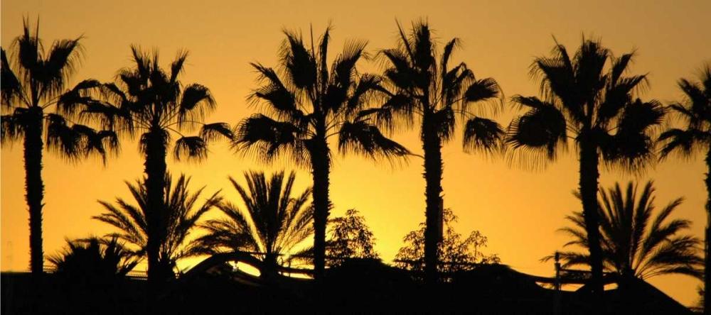 Sunset Palms I Spindel, David 146583