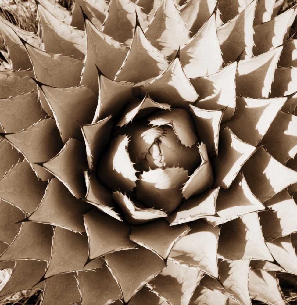 Desert Plants II Stefko, Bob 9830