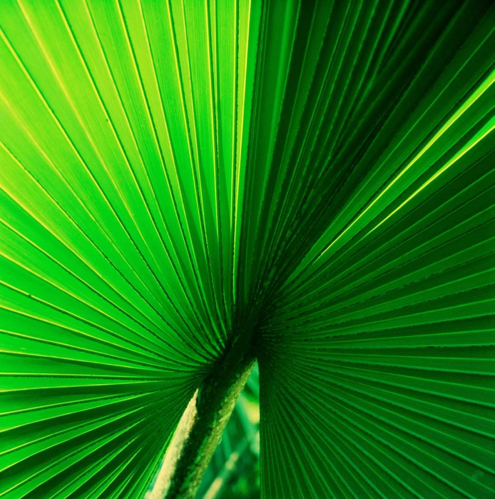 Palm Frond I Stefko, Bob 9867
