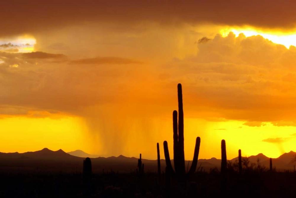 Sunset Rain Taylor, Douglas 25168