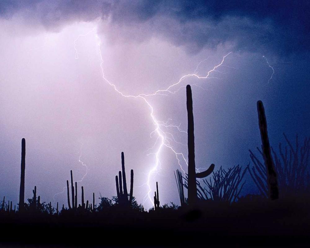 Electric Desert II Taylor, Douglas 25179