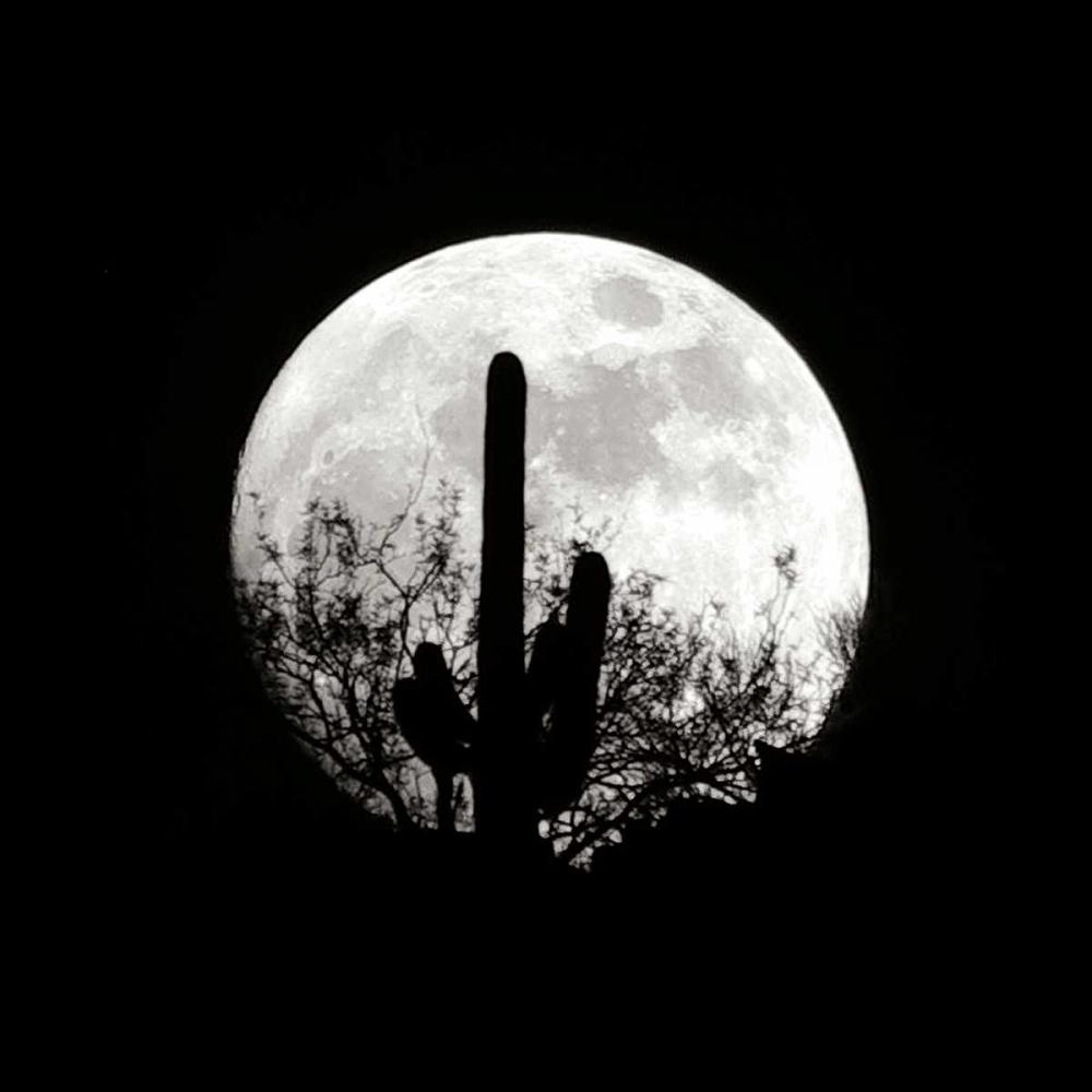 Moonrise in May II Taylor, Douglas 25201