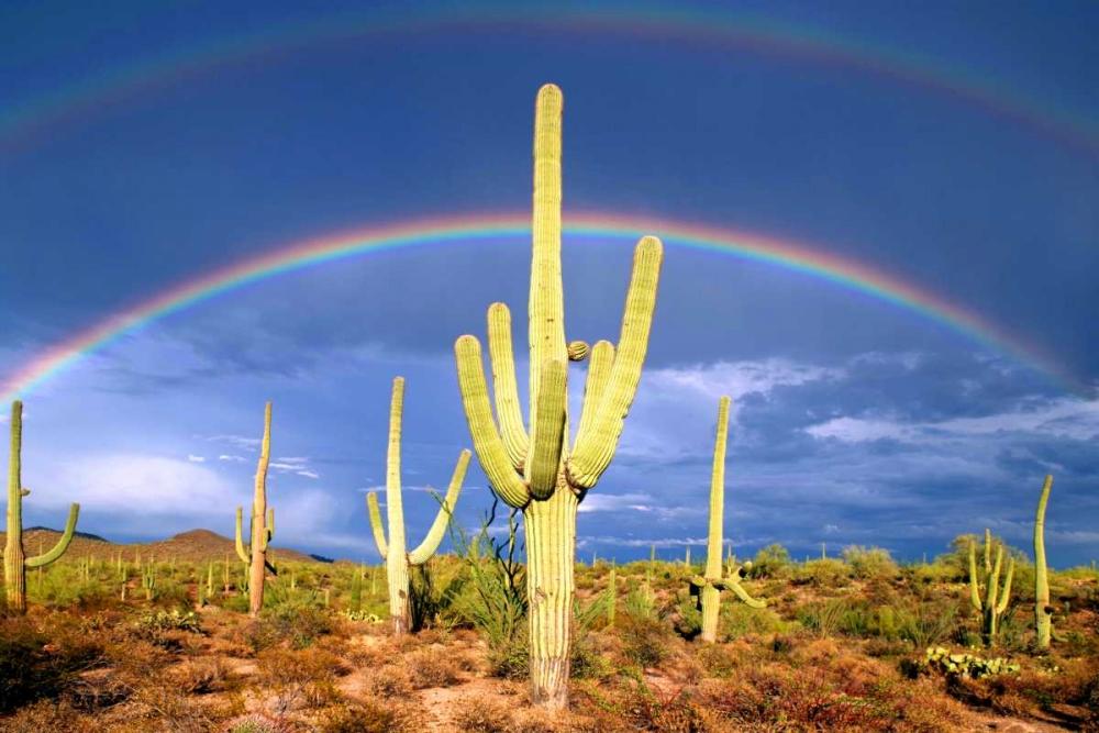 Desert Blessing I Taylor, Douglas 146613