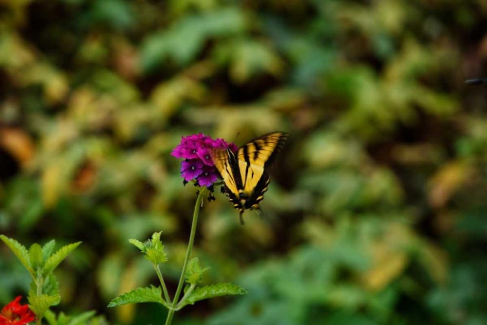 Garden Butterfly II Clayton-Thompson, Philip 3556