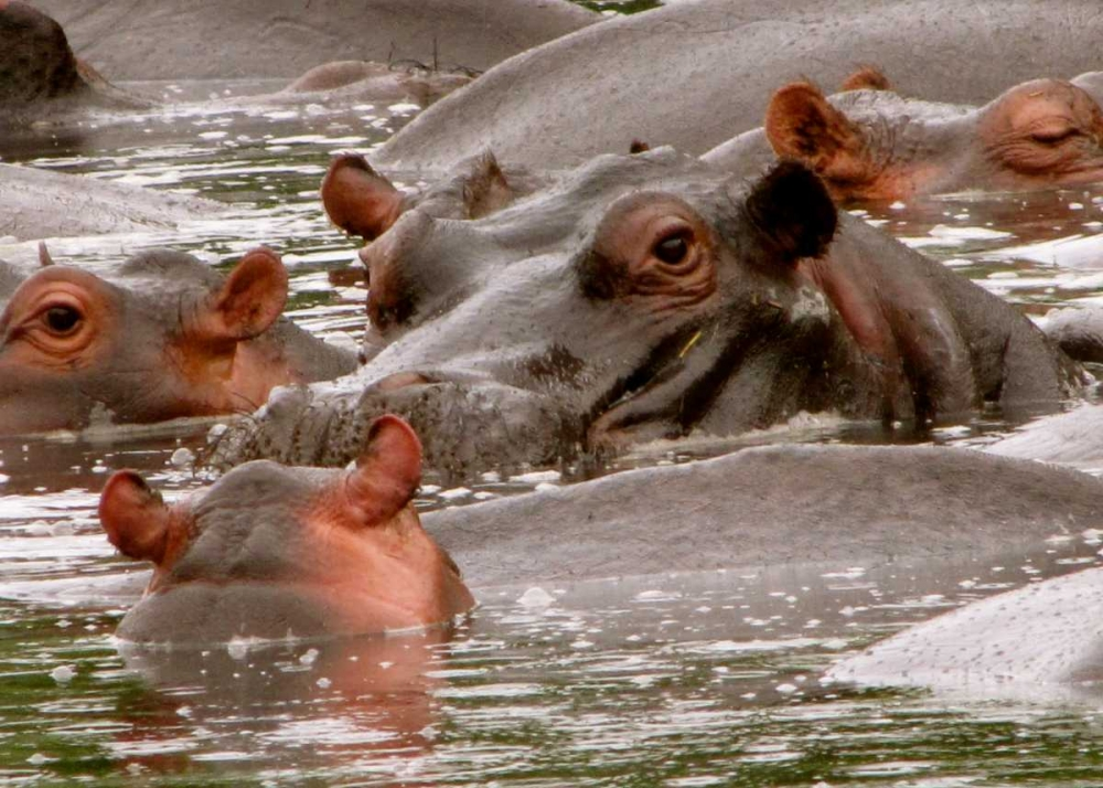 Hippo II Underdahl, Dana 3680