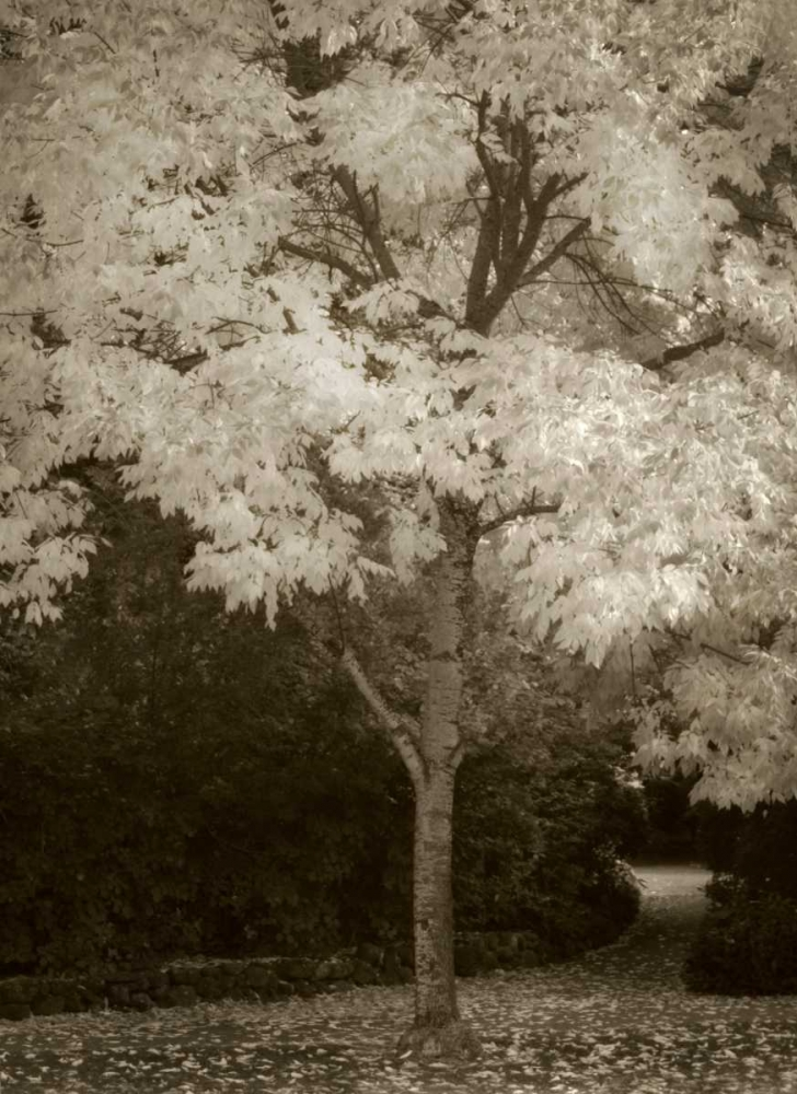 Fall Maple Fever VI Geyman, Vitaly 3778